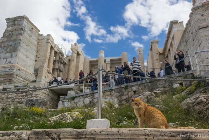 cats-of-acropolis-garfield