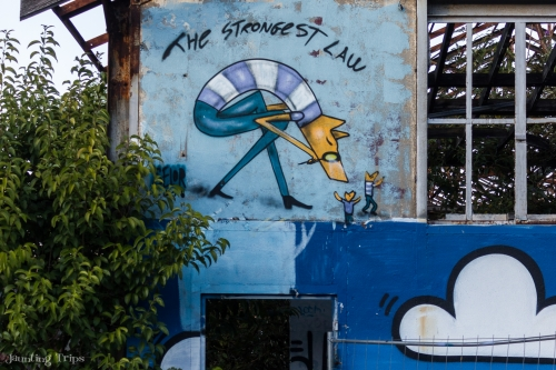 Graffiti by David Selor - the Yellow Fox