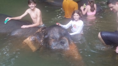 The kids bathed the elephants!