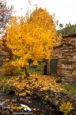 otoño 3