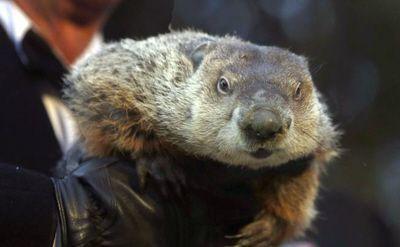 La marmota Phil