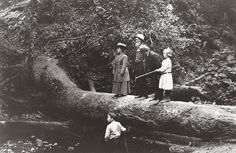 John Muir y unos amigos en Muir Woods (21 de agosto de 1909)