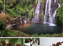 Hutan Desa Wanagiri