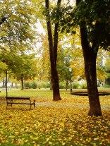 Žuta-jesen