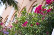 Flowers Exterior Gardening Biltmore
