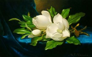 giant magnolias on blue velvet