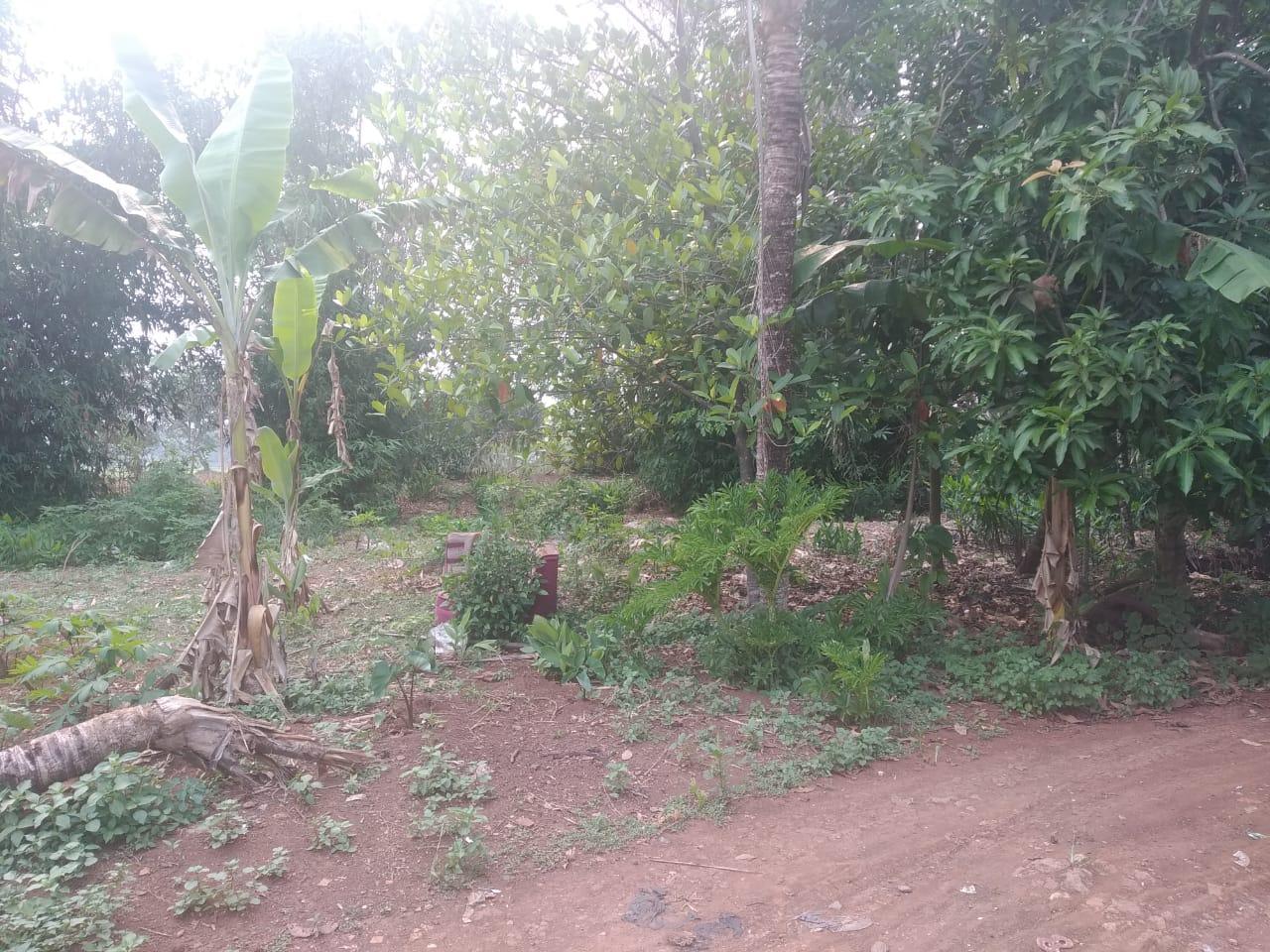 Jual Tanah kampung Cileungsi