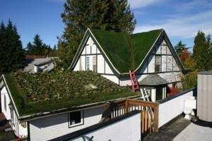atap-rumah2