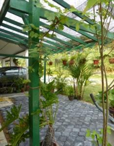 bahan kanopi vegetasi