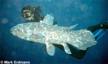 Arnaz Erdmann swimming with the Indonesian coelacanth