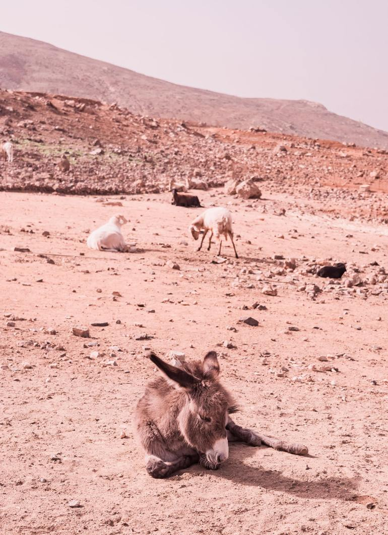 Island of Fuerteventura, Canary Islands