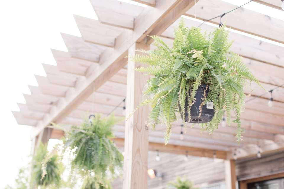 Ferns hanging from a wooden pergola during an engagement shoot in Philadelphia