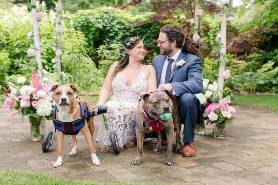 The bride and groom pose with their dogs in front of their birchwood chuppah