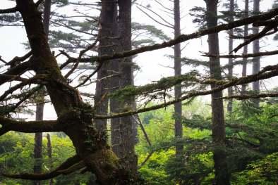 Olympic Photo Adventure - Trees Fog Mist Coast Washington