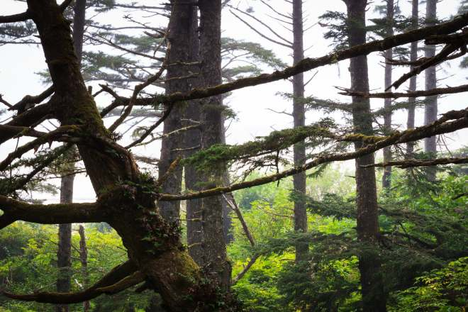 Olympic Photo Adventure - Trees Fog Mist Coast Washington