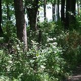 Forested areas provide some off the trail discoveries at Lake of Three Fires. Pic provided the Iowa DNR website.