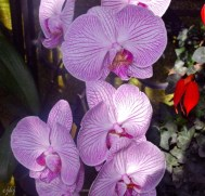 another orchid.....
