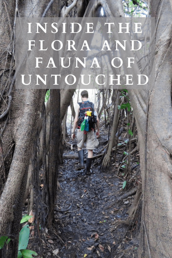 Inside the flora and fauna of untouched
