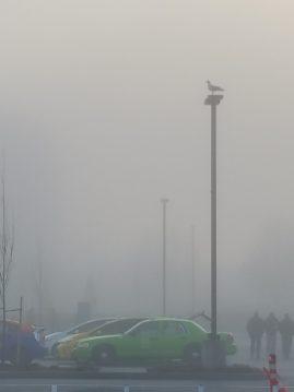 Fog at PDX