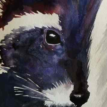 Watercolor Raccoon