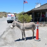 Oatman Arizona - Route 66- Road Trip 2014