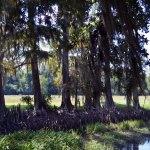 Along The Natchez Trace