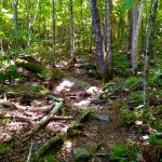 Silver Lake Hiking Trail