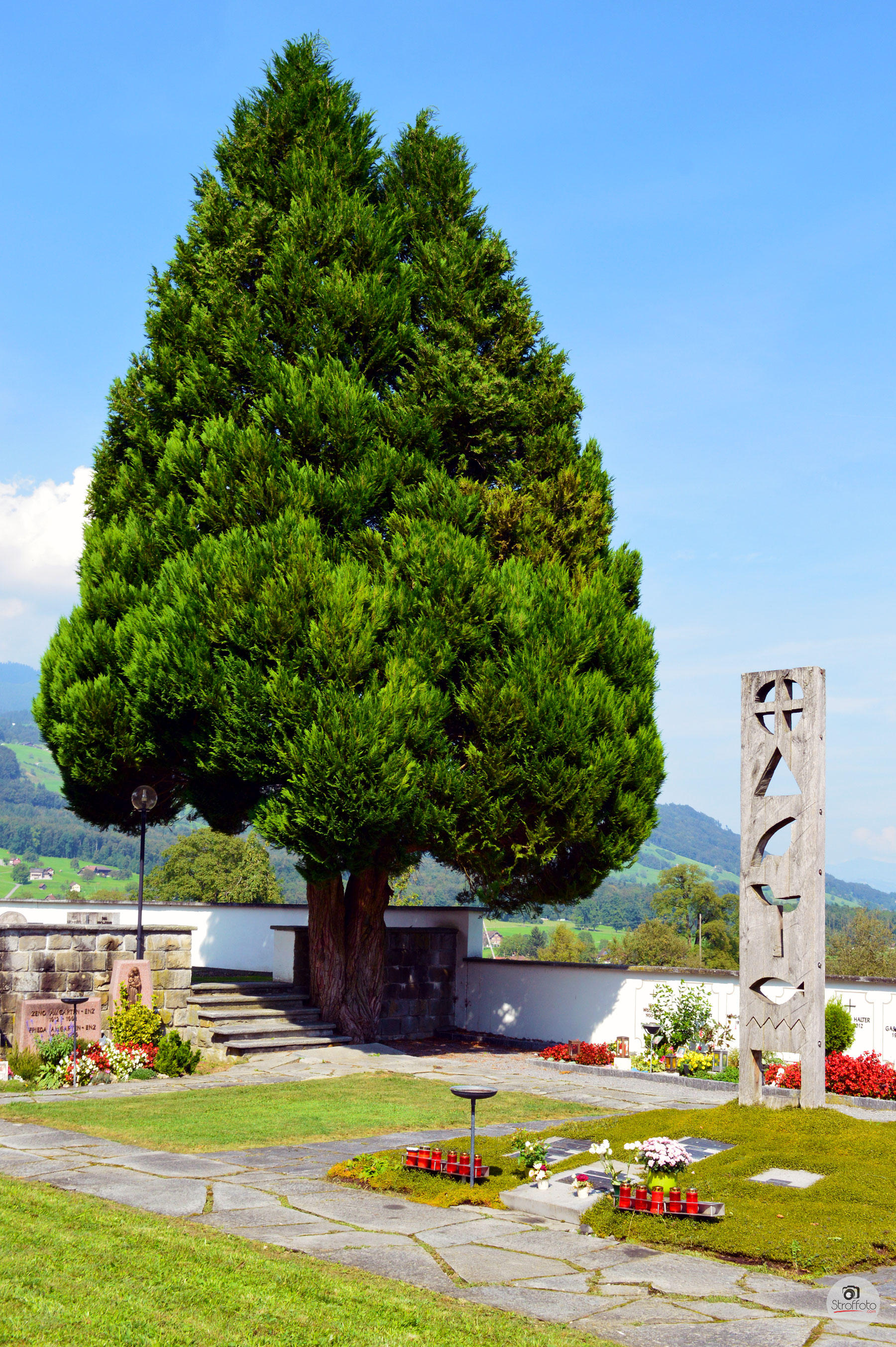 Beautiful Tree Behind the Roman Catholic Church in Giswil Switzerland