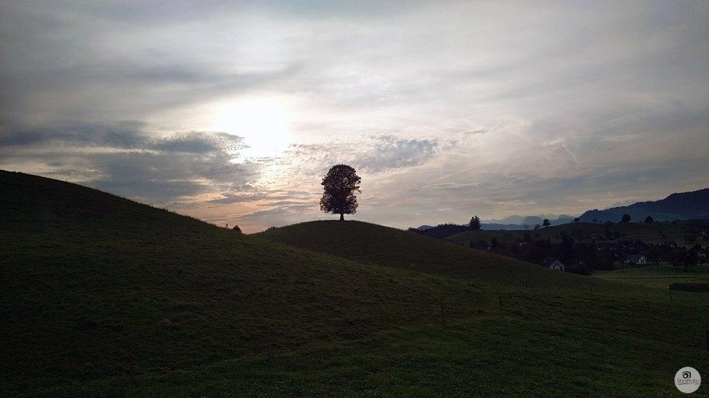 Lonely Tree in Switzerland