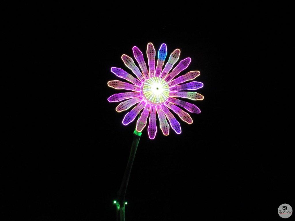 Electric Daisy Carnival - Daisy