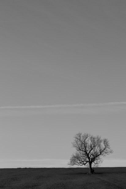 Chapel Hill Tree, #01