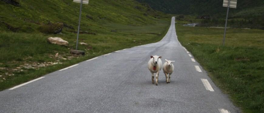 spotkanie na drodze