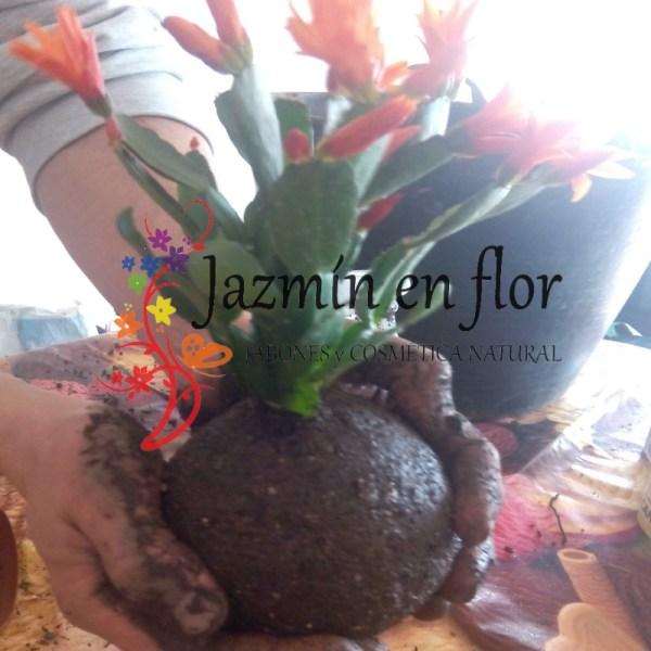 Taller de kokedama Jazmin en flor