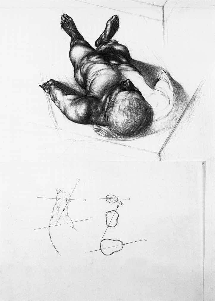 Anatomy For The Artist Jeno Barcsay Pdf Editor - jazzcelestial