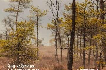 Žofie Kašparová & Peacock Tree: Impressions