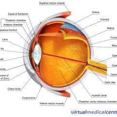 Human Taste Buds Diagram Rs232 To Rs485 Wiring Anatomy