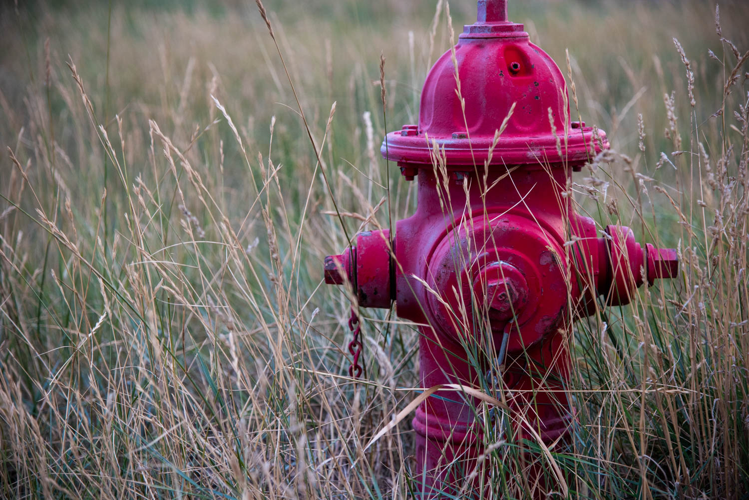 Hydrant in the Grass