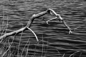 Branch Over Water