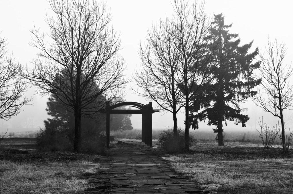 Arbor in Fog