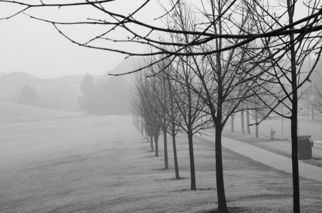 Line of Trees in Fog