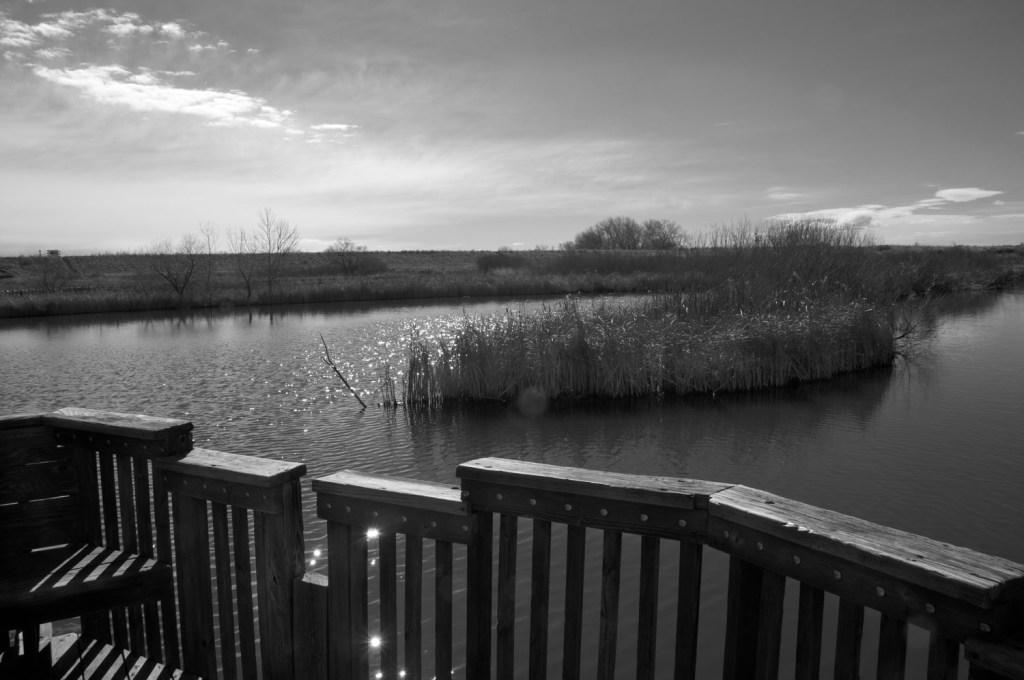 Pond in Rural Park