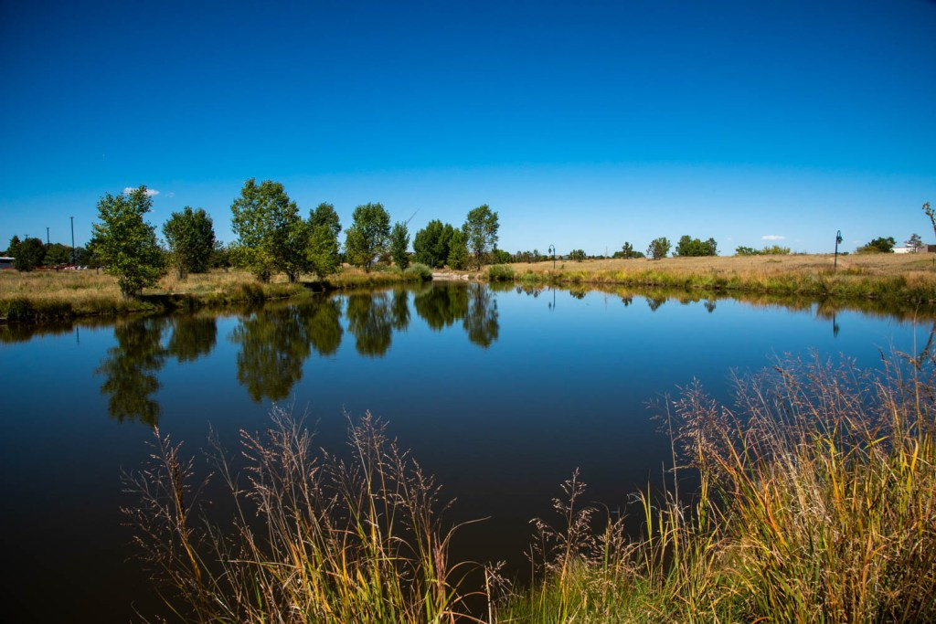 Serene Urban Pond