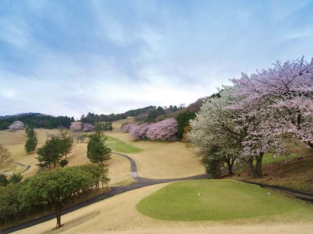 同クラブの名物ホールは、桜の季節になるとティーイングエリアからグリーンまで満開の桜を愉しめる15番ホール。随所で桜を愉しめるコースの中でも、ここ15番ホールの桜の美しさは圧巻だ。打ち上げの左ドッグレッグで戦略的にも面白いパー5だ
