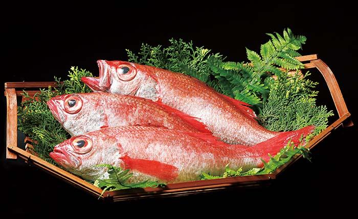 今を代表する高級魚〈のど黒〉は、白身でありながら上質な脂がたっぷりと乗っている。鮮度の良いものほど透明感のあるルビーのような美しい色をしている
