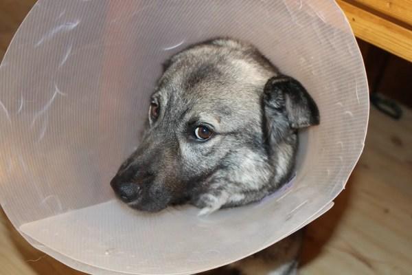 sick-dog-1063663_1280