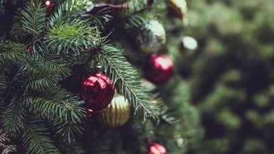 christmas tree decorations mount joy