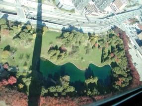 Green Wavy Pond
