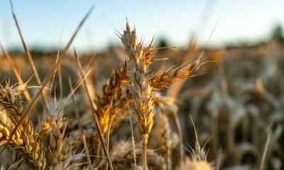 os produtos alimentícios à base de cereais precisarão obedecer novos critérios para serem identificados como alimentos integrais.