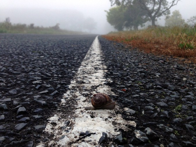 a snail crossing the finish-line.