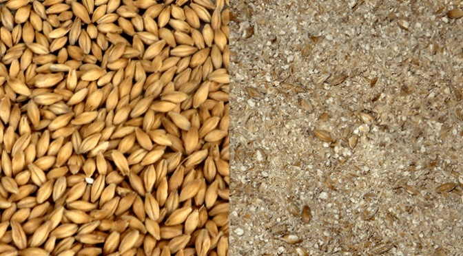 Grain side-by-side crushed & uncrushed